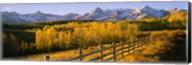 Trees in a field near a wooden fence, Dallas Divide, San Juan Mountains, Colorado Fine-Art Print