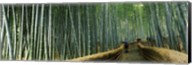 Stepped walkway passing through a bamboo forest, Arashiyama, Kyoto Prefecture, Kinki Region, Honshu, Japan Fine-Art Print