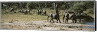 African elephants (Loxodonta africana) in a forest, Hwange National Park, Matabeleland North, Zimbabwe Fine-Art Print
