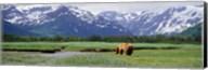 Kukak Bay, Katmai National Park, Alaska Fine-Art Print