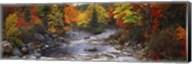 Stream with trees in a forest in autumn, Nova Scotia, Canada Fine-Art Print