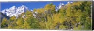 Forest with snowcapped mountains in the background, Maroon Bells, Aspen, Pitkin County, Colorado, USA Fine-Art Print