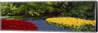 Flowers in a garden, Keukenhof Gardens, Lisse, Netherlands Fine-Art Print