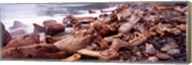 Driftwood on the beach, Oregon Coast, Oregon, USA Fine-Art Print