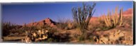 Organ Pipe Cacti, Organ Pipe Cactus National Monument, Arizona, USA Fine-Art Print