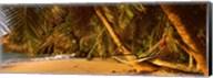Hammock between two palm trees, Seychelles Fine-Art Print