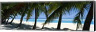 Palm trees on the beach, Aitutaki, Cook Islands Fine-Art Print