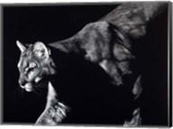 Prowler Fine-Art Print