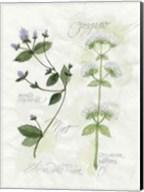 Oregano & Mint Fine-Art Print