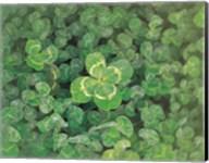 Close up of green clover Fine-Art Print