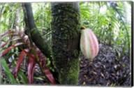 Cocoa tree in a rainforest, Costa Rica Fine-Art Print