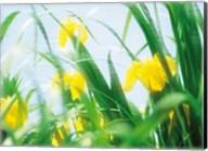 Yellow flowers with grass an sky Fine-Art Print