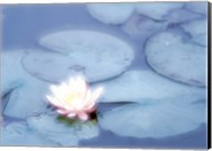 Pink Flower in Pond, Lotus Fine-Art Print