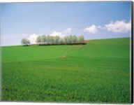 Trees lined in crop field with sky and clouds in background Fine-Art Print