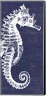 Denim Washed Seahorse Fine-Art Print