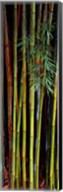 Close-up of bamboos, Kanapaha Botanical Gardens, Gainesville, Florida, USA Fine-Art Print