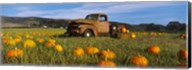 Old Rusty Truck in Pumpkin Patch, Half Moon Bay, California, USA Fine-Art Print