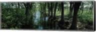 Trees along Blanco River, Texas, USA Fine-Art Print