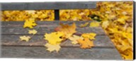 Fallen leaves on a wooden bench, Baden-Wurttemberg, Germany Fine-Art Print