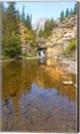 Flowing stream in a forest, Banff National Park, Alberta, Canada Fine-Art Print