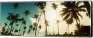 Palm trees along the beach in Morro De Sao Paulo, Tinhare, Cairu, Bahia, Brazil Fine-Art Print
