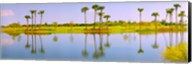 Reflection of trees on water, Lake Worth, Palm Beach County, Florida, USA Fine-Art Print