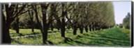 Trees along a walkway in a botanical garden, Niagara Falls, Ontario, Canada Fine-Art Print