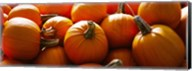 Pumpkins, Half Moon Bay, California, USA Fine-Art Print