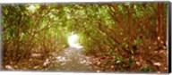 Trees on the entrance of a beach, Delray Beach, Palm Beach County, Florida, USA Fine-Art Print