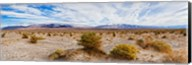 Bushes in a desert, Death Valley, Death Valley National Park, California, USA Fine-Art Print
