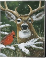 Deer With Cardinal Fine-Art Print