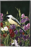 Sweet Peas And Chickadee Fine-Art Print