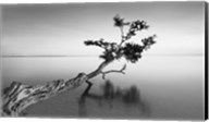 Water Tree IX Fine-Art Print