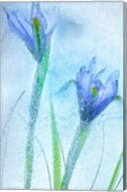 Flores Azules 57 Fine-Art Print