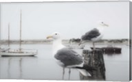 Two Seagulls & Boats Fine-Art Print