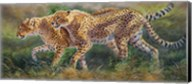 March Of The Cheetahs Fine-Art Print