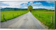 Country gravel road passing through a field, Hyatt Lane, Cades Cove, Great Smoky Mountains National Park, Tennessee Fine-Art Print