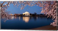 Cherry Blossom Tree with Jefferson Memorial, Washington DC Fine-Art Print