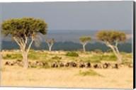 Masai Mara National Reserve, Kenya Fine-Art Print