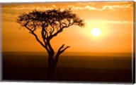 Silhouette of tree at dusk, Tanzania Fine-Art Print
