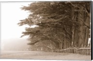 Cypress trees along a farm, Fort Bragg, California, USA Fine-Art Print