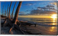 Dead Trees on the Beach at Sunset, Lovers Key State Park, Lee County, Florida Fine-Art Print