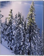 Snow Covered Trees at South Rim, Crater Lake National Park, Oregon Fine-Art Print
