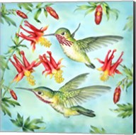 Calliopes Hummingbirds Fine-Art Print