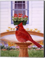 Cardinal And Geraniums Fine-Art Print