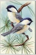 Chickadee Vignette Fine-Art Print