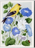 Goldfinch And Morning Glories Fine-Art Print