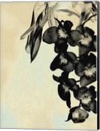 Orchid Blush Panels II Fine-Art Print