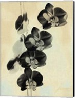 Orchid Blush Panels III Fine-Art Print