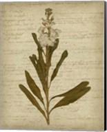 Romantic Pressed Flowers III Fine-Art Print